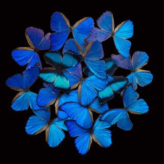 """Bild """"Blue Butterfly"""""""